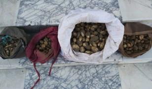 Elazığ'da Salep soğanı toplayan 4 kişiye 307 bin TL'lik rekor ceza