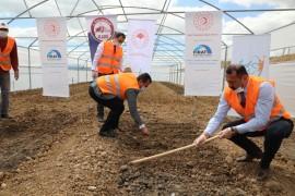 Elazığ'da çiftçiye 2 milyon fide desteği için üretim
