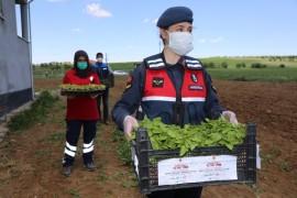 Vefalı eller, 2 milyon fideyi çiftçiye ulaştırmaya başladı