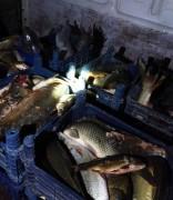 Elazığ'da 400 kilo kaçak balık ele geçirildi