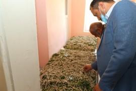 """Elazığ'da """"İpekböceği Yetiştiriciliği"""" projesi"""