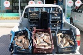 Elazığ'da bir ton kaçak balık ele geçirildi, 10 bin TL ceza kesildi