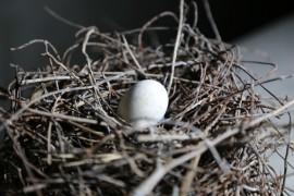 Elazığ'da güvercin yerin 6 metre altına demirden yuva yaptı