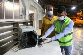 Elazığ'da yaralı güvercin tedavi altına alındı