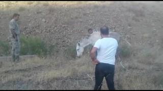 Ölüme terk edilen ayağı kırık at kurtarıldı