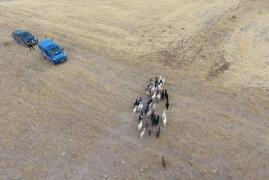 Elazığ'da firar eden hayvanlar, 7 kilometre uzakta drone ile bulundu