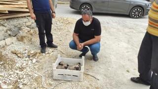 Gözleri açılmamış yavru köpekler, kasa ile ölüme terk edildi