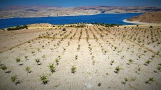 Şehit oğlunun anısına, 2 bin 500 fidanla orman oluşturdu
