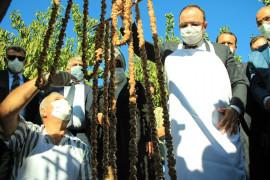 Elazığ'da 14. Bağ Bozumu ve Orcik Festivali
