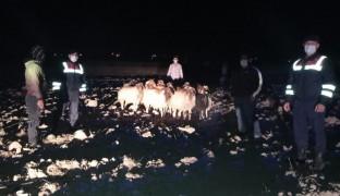 Kayıp koyunlar 9 kilometre uzakta bulundu