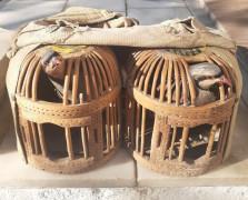 Usulsüz keklik avına 3 bin 100 TL ceza