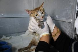 Akaryakıt tankına düşen kedi, zeytinyağı ile 2 saatte temizlendi