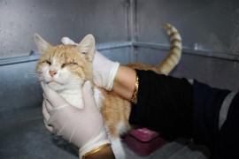 Depremde 2 kedi gözlerini kaybetti, şimdi sıcak yuva bekliyor