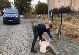 Jandarma, kısıtlama da sessiz dostlarını beslemeyi ihmal etmedi