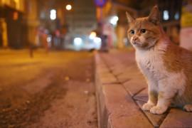Yılbaşı kısıtlamasıyla deprem bölgesi Elazığ'da sessizliğe büründü