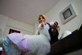 Annesinin reddettiği kuzuya, sağlıkçı şefkati