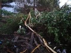 Elazığ'da yıldırımın düştüğü ağaç ikiye ayrıldı