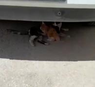 Havalandırma boşluğuna düşen yavru kedi kurtarıldı