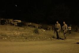 Kayıp hayvanlar, gece görüş termalleriyle bulundu
