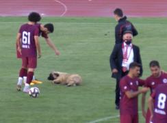 Sevimli köpek önce futbolcularla antrenman yaptı sonra sahadan çıkmadı