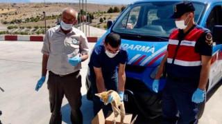 Elazığ'da jandarmadan yaralı tilkiye şefkat eli