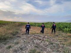 Elazığ'da jandarmadan suların çekildiği alanlarda yasa dışı kenevir ekimine karşı önlem